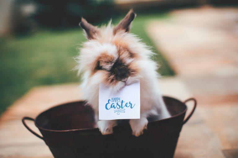 fluffiges kaninchen mit happy easter schild