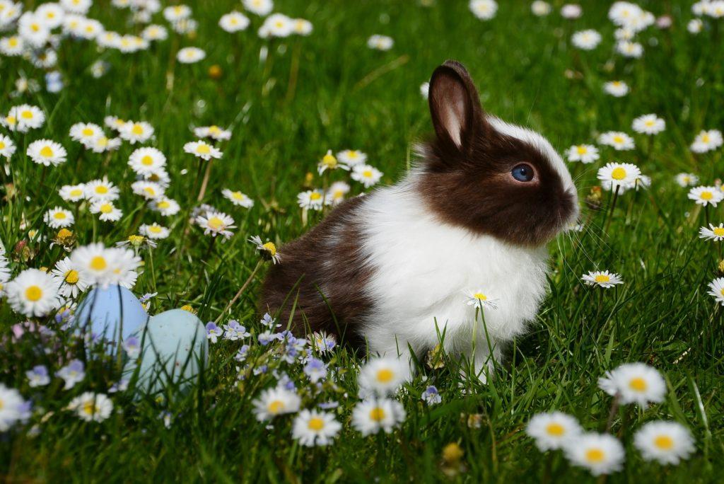 schwarz weißes kaninchen in blumenwiese mit eiern