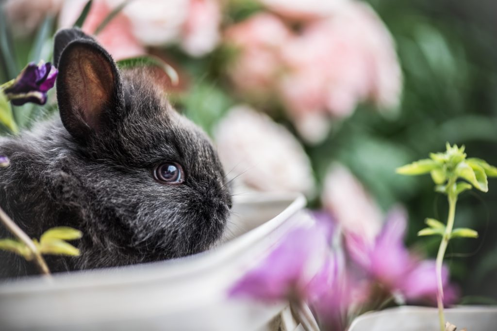 kaninchen in schüssel mit frühlingsblumen