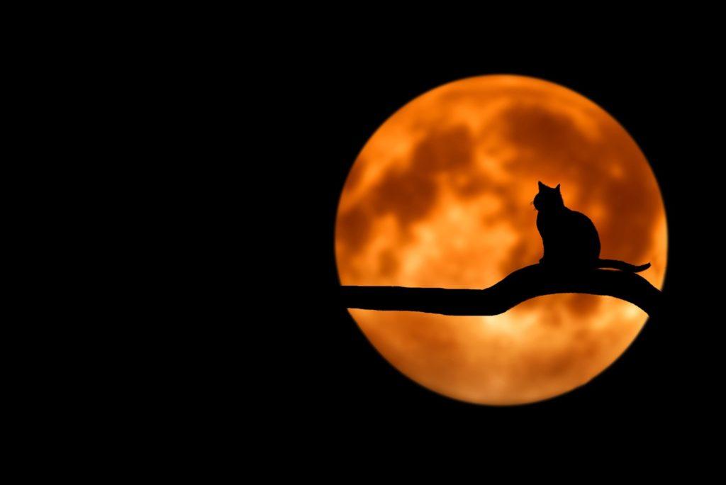 katze vor rotem mond and halloween silhouette