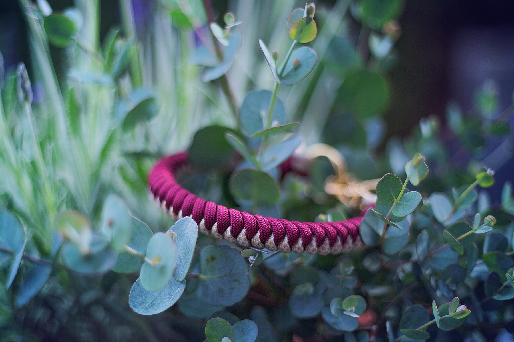 paracord halsband für kleine hunde in wunschfarben