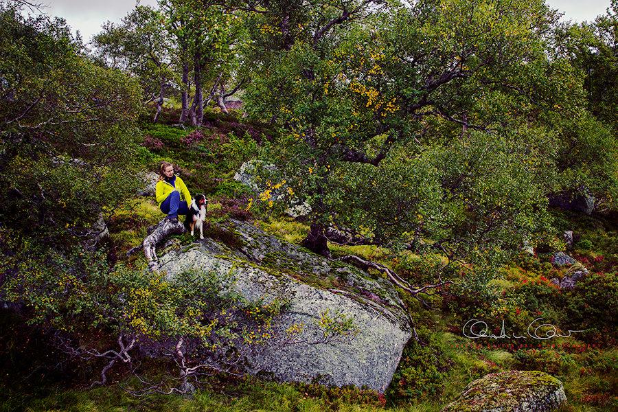 black tri australian shepherd und frauchen in fidjeland in norwegen