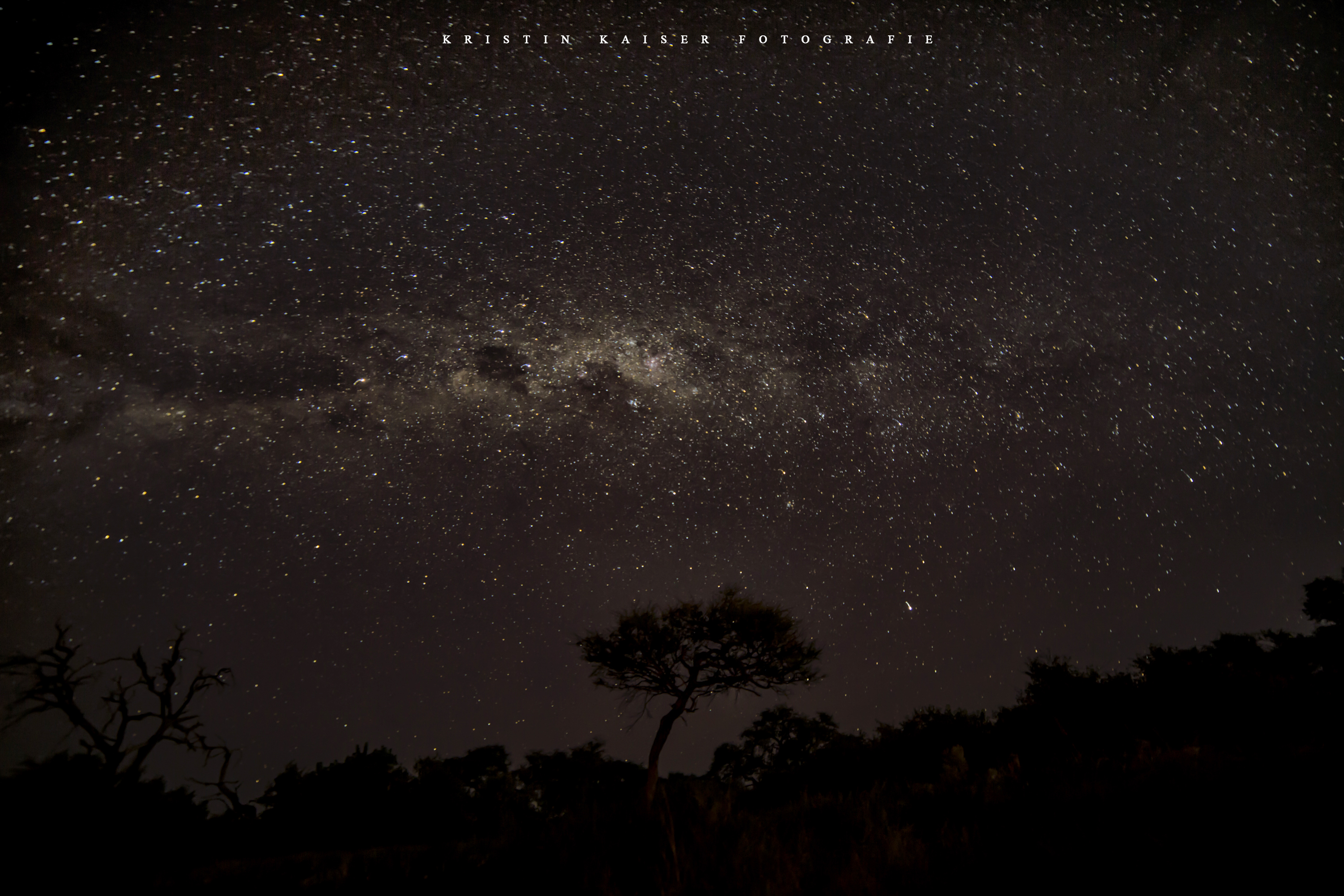 Milky Way & Acacia, Khwai Community Concession